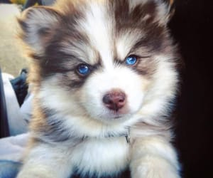 animal, dog, and blue image