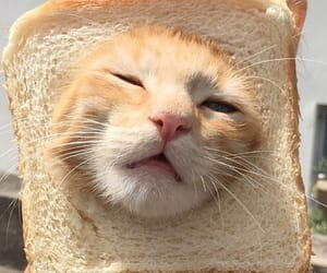 bread, cat, and cute image
