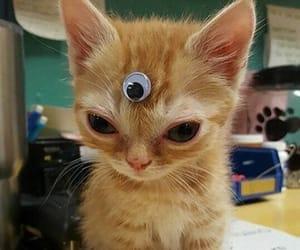 cat, cute, and alien image
