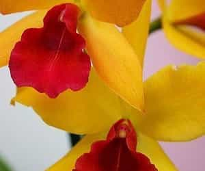 flowers and yellow and red image