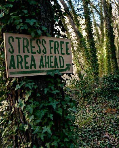 nature, stress, and forest image