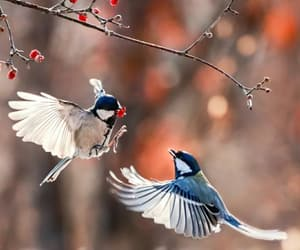 nature photography, nature love, and bird love image