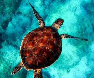 sea, turtle, and animal image