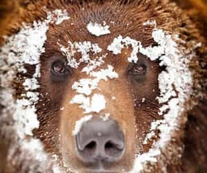 bear, nature, and snow image
