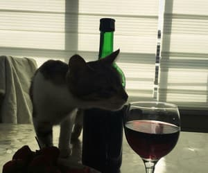 cat, wine, and animal image