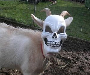 goat and aesthetic image