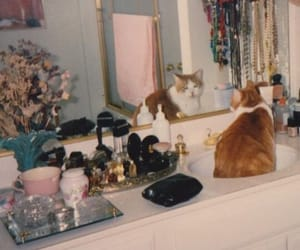 animals, kitten, and perfume image
