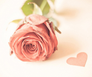 rose, heart, and pink image