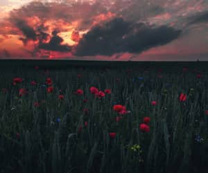 flowers, plants, and poppies image