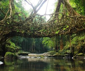 amazing, roots, and forest image