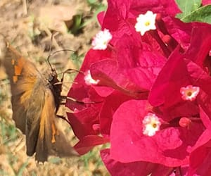 butterfly, enfoque, and profesional image
