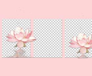 pink, header, and soft image