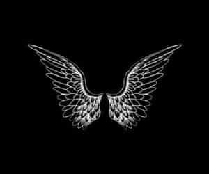 angel, wings, and fly image