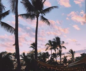 california, hawaii, and palm trees image
