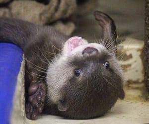otter and cute image
