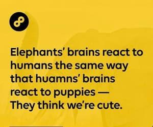 elephants image