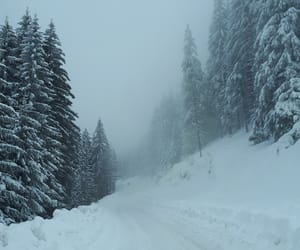 forest, winter, and românia image