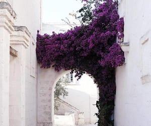 flowers, purple, and tumblr image