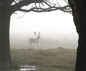 animal, deer, and hipster image
