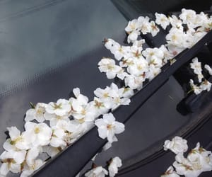 flowers, white, and car image