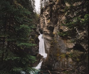 nature, explore, and forest image