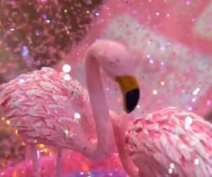 flamingo, glitter, and pink image