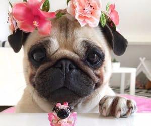dog, flowers, and pug image