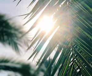 sun, wallpaper, and green image