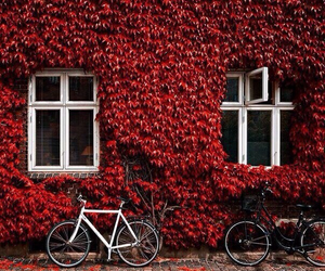 aesthetic, autumn, and bicycle image