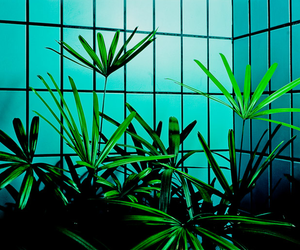 green, blue, and plants image