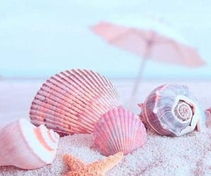 beach and shells image
