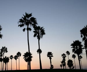 palms, beach, and california image