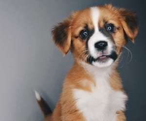 animals, cute puppy, and dog image
