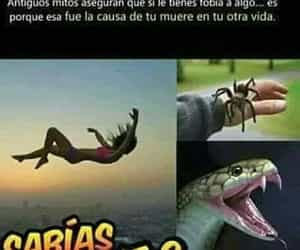 snake, spider, and araña image