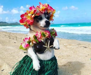 dog, hawaii, and Honolulu image