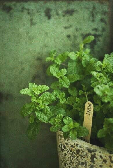 mint, green, and herbs image