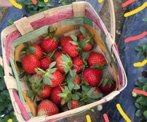 camp, fruit, and strawberry image