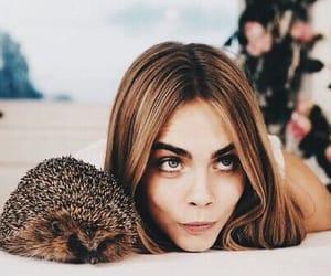 cara delevingne, model, and hedgehog image