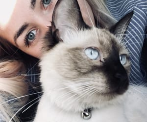 blue eyes, cat, and fox image
