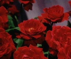 icon, red, and roses image