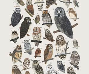 owl, want, and those cetaceans tho image