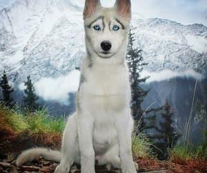animal, blue, and snow image