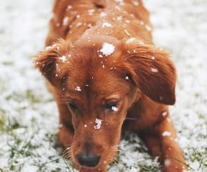 adorable, nature, and puppy image