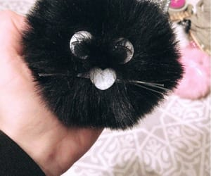 cat, snaps, and cute image