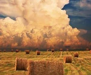 farm, farmland, and country living image