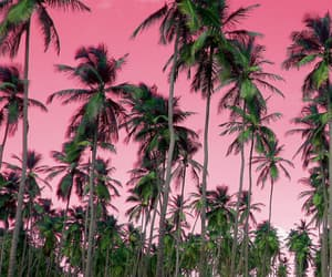 pink, nature, and summer image