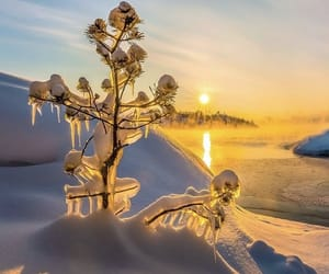 cold, golden, and icy image