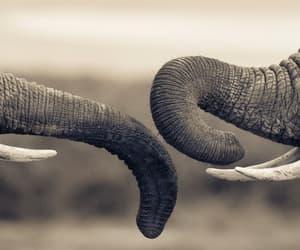 elephant, beautiful, and couple image