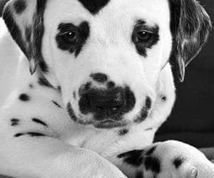 amor, Animales, and blanco y negro image