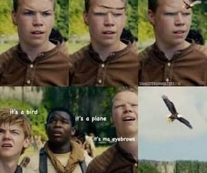 funny, eyebrows, and the maze runner image